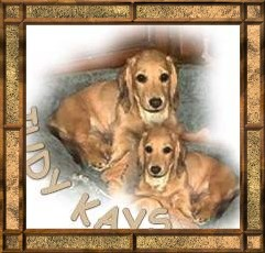 Judy Kay's Adult Dachshund Page